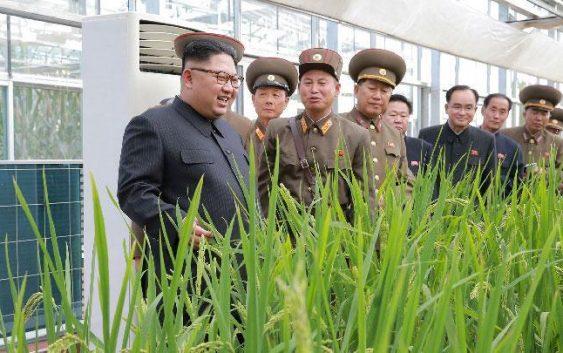 Korea Utara Terancam Krisis Pangan