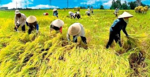 DKI Gandeng Petani Daerah, Siapkan 1.000 Ton untuk 2021