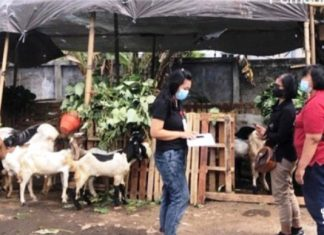 Jelang Idul Adha, Pemkot Denpasar Cek Kesehatan Hewan Kurban
